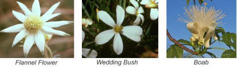 bushflowers1